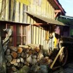 Le Canon, Cap Ferret, cabane à huîtres